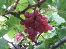 Paxos wine making